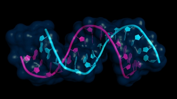 Journal publishes paper by video-gamers who derived scientific rules from Stanford online RNA game