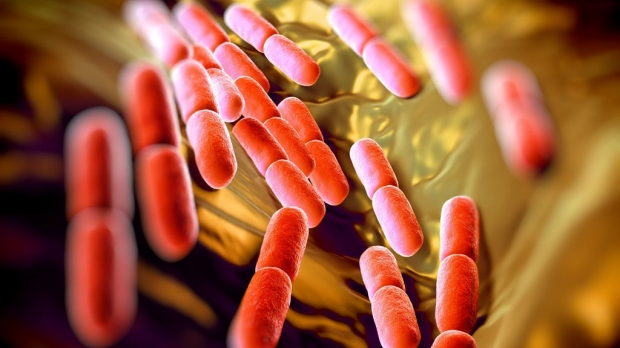 Study provides insight into bacterial resilience, antibiotic targets