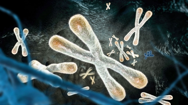 DNA damage response links short telomeres, heart disorder in Duchenne muscular dystrophy