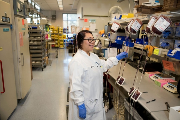 A female technician in Stanford's blood center