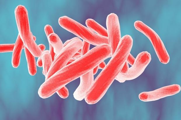 Illustration of tuberculosis bacteria