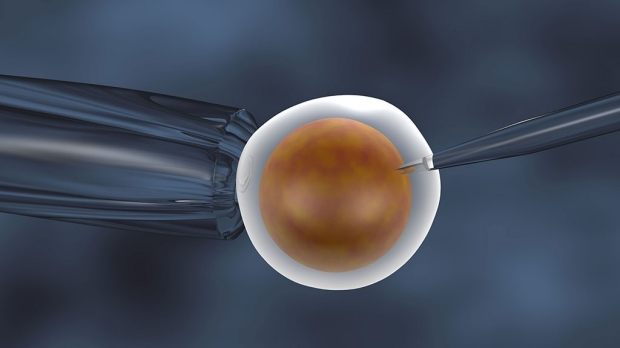 Freezing embryos linked to more IVF pregnancies