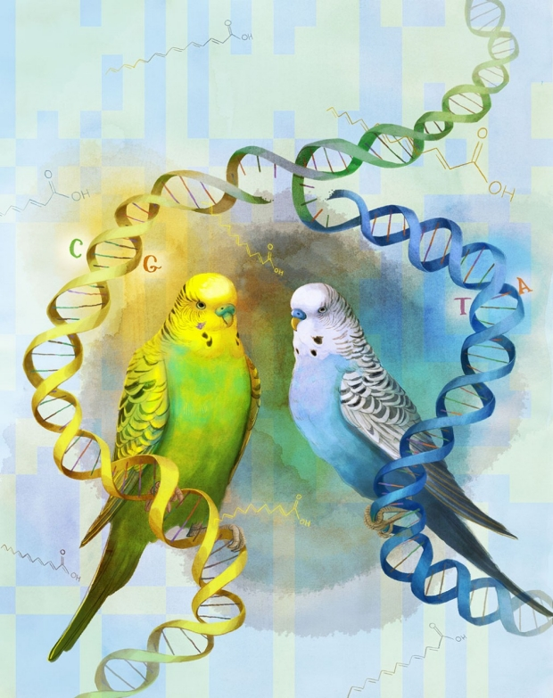 Drawing of two parrots with strands of DNA around them