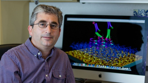 Stem cells for fat have circadian clock
