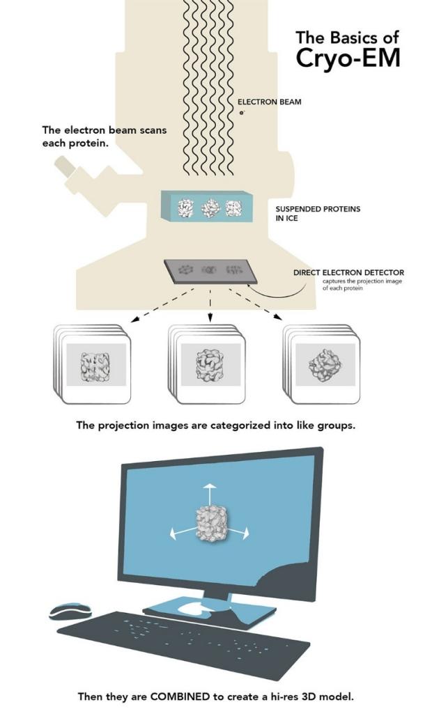 Illustration of the cryo-EM process