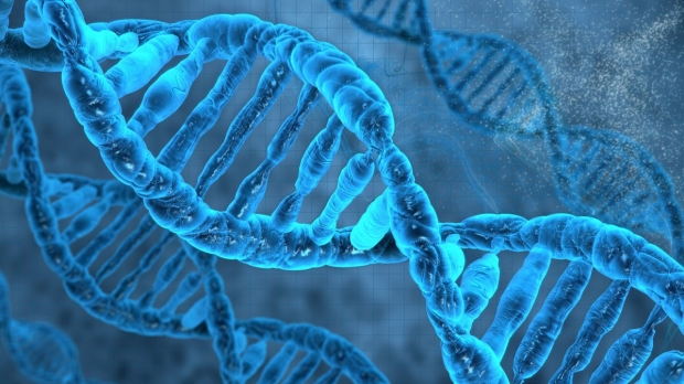 DNA folding key to cell differentiation