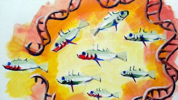 Fragile DNA creates evolutionary hot spot