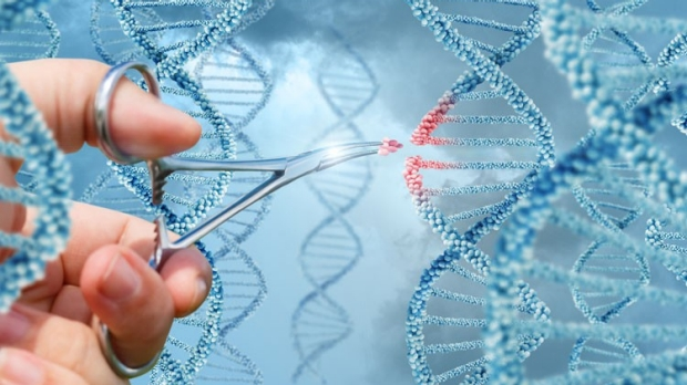 Scientists use CRISPR for possible
