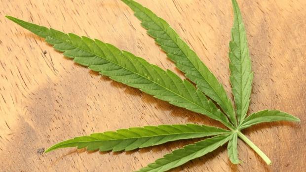 Medical marijuana does not reduce opioid deaths