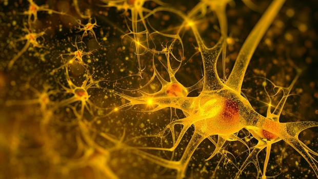 Scientists boost neuron recovery in rats