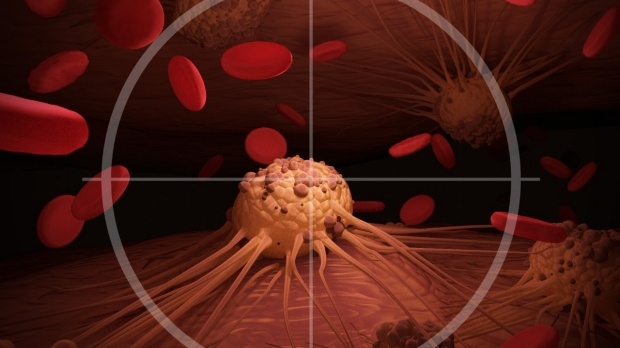 Stanford researchers program cancer-fighting cells to resist exhaustion, attack solid tumors in mice
