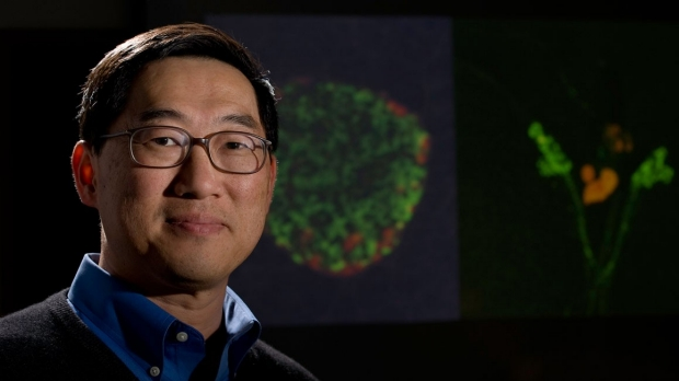 Defect in alpha cells linked to diabetes