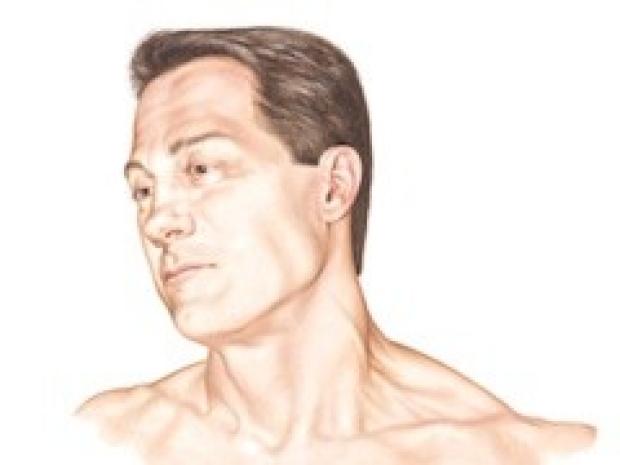 Head & Neck Illustration