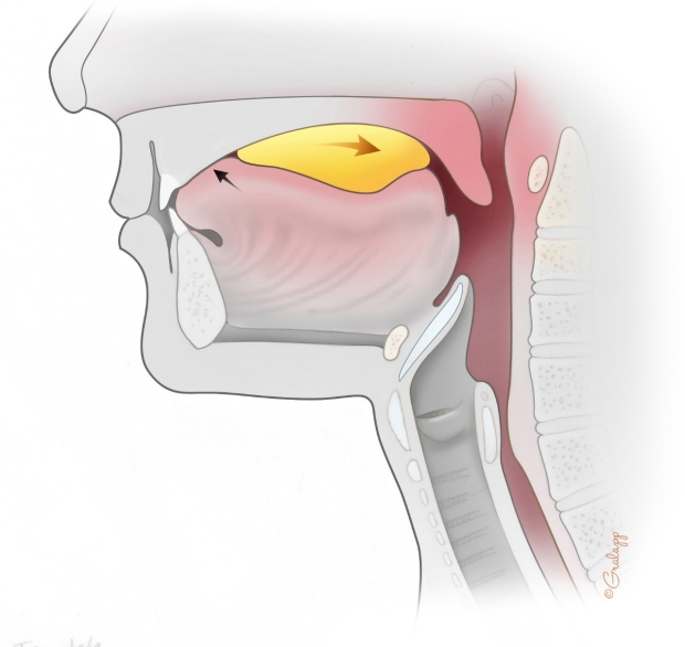 Swallowing stage 1 illustration