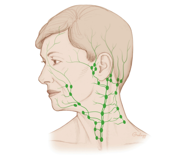 An illustration of a head with lymph nodes