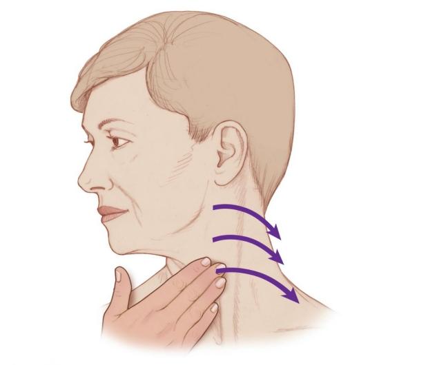 An illustration of a human head showing lymph node manual exam