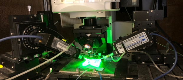 Physiology rigged with fluorescence