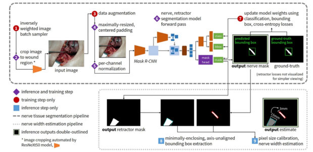 """Figure 1 diagram from """"Using deep learning to identify the recurrent laryngeal nerve during thyroidectomy publication"""