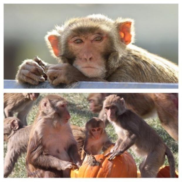 Primates at CNPRC