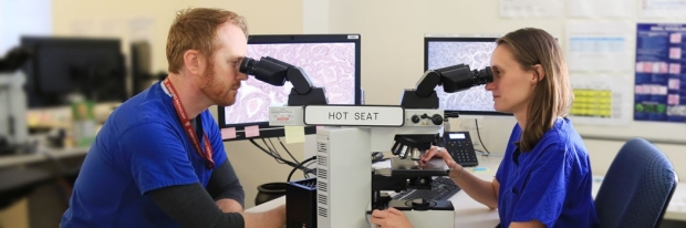 Researchers looking through microscopes