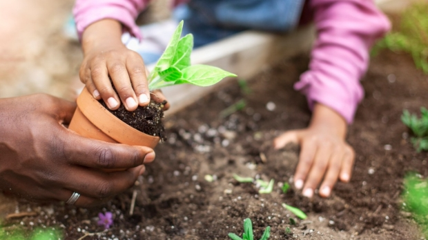 African-American father and daughter planting potted plant at community garden stock photo...