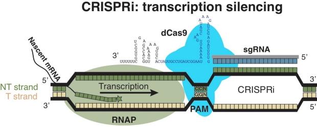 CRISPRi
