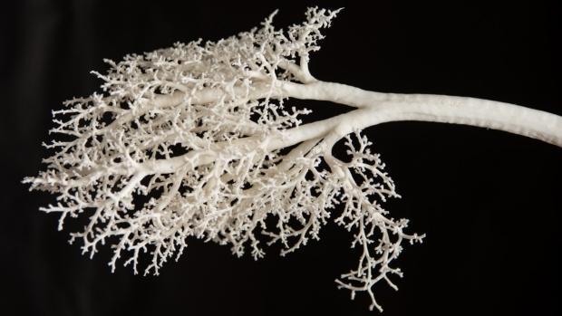Lung branch