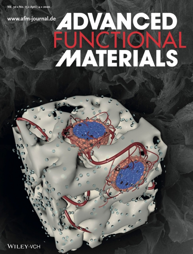 3D cover illustration of islet bioscaffold for Advanced Functional Materials, Vol 30, Num 15, April 14, 2020