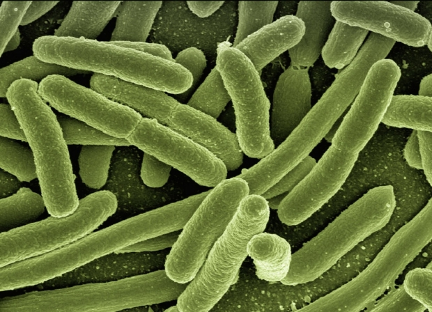 bacteria-123081_1920