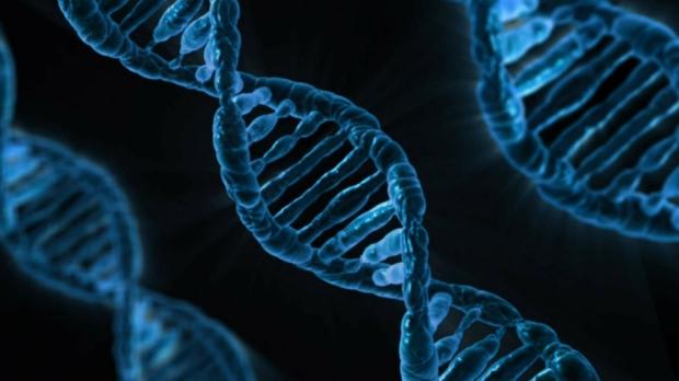 JPG DNA