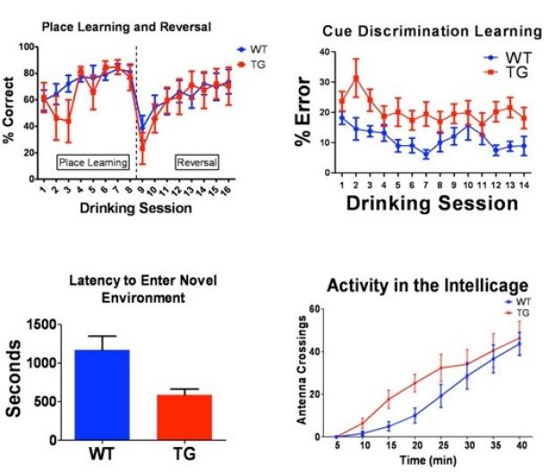 Intellicage Learning Paradigm
