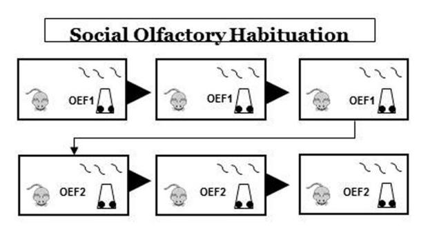 Olfactory Habituation and Dishabituation