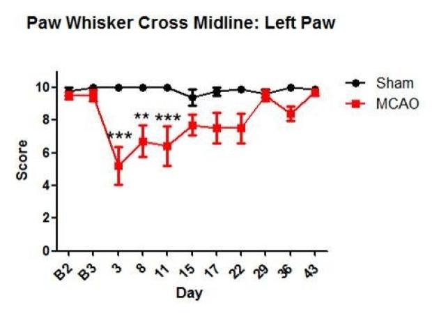 Paw Whisker