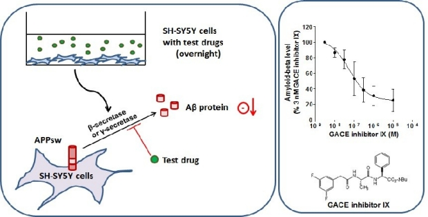 Cell Based Assays- Amyloid beta toxicity