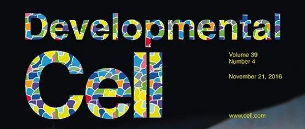 Developmental Cell logo