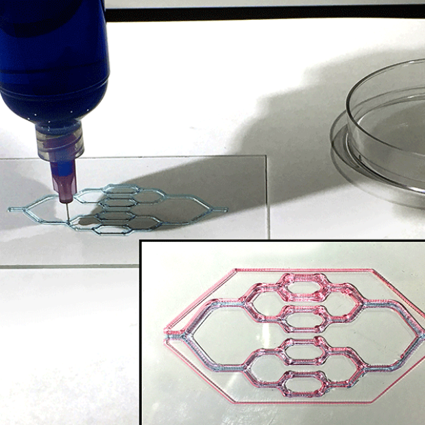 Printing the vascular tree network using two different pluronic bioinks