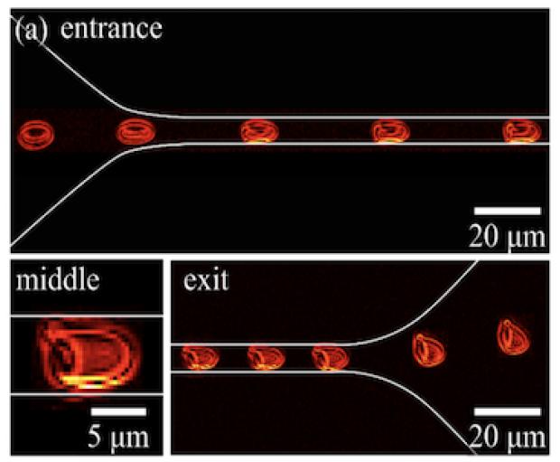 blood-microfluidics2