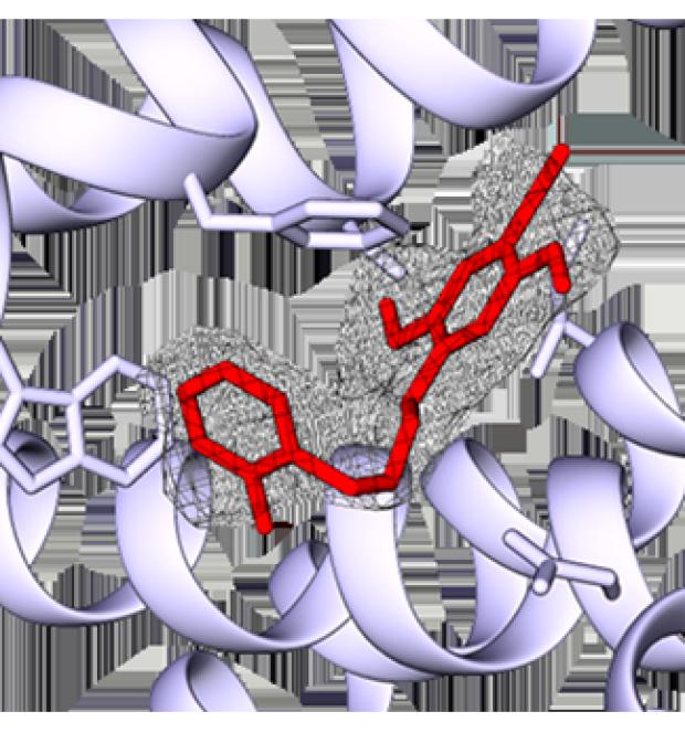 map model ligand fit figure