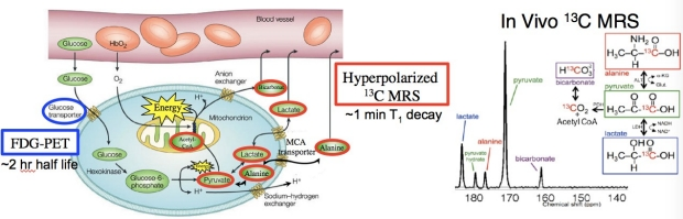 Hyperpolarized pyruvate