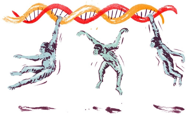 Illustration of chimps swinging from a DNA strand