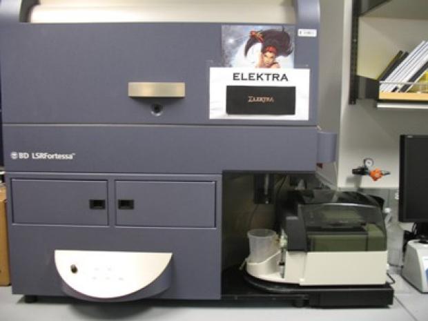 elektra400