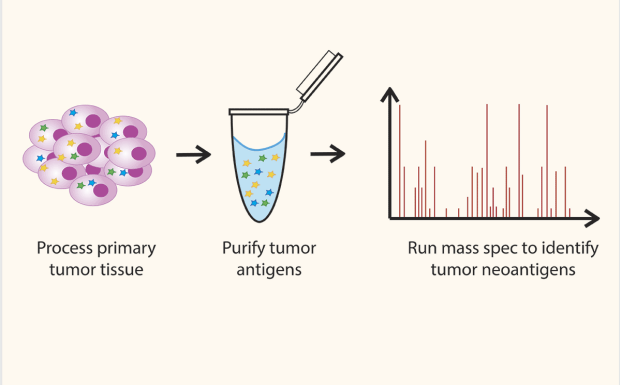 Identifying Tumor Neoantigens via Mass Spectrometry diagram