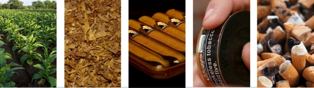 Tobacco plants, dried, in cigar form, in smokless form, and cigarette butts