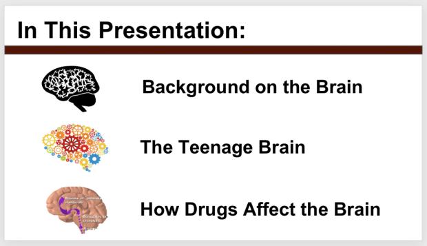 Brain-101-Preview