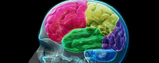 x-ray like image of human head with colored brain lobes