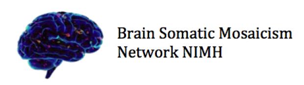brainsomaticlogo