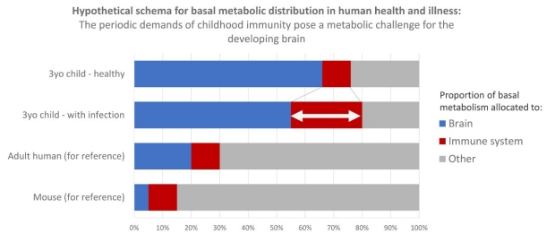 Hypothetical schema for basal metabolic distribution in human health and illness: