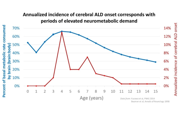 Cerebral ALD and neurometabolic hurdle