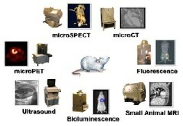 Application of imaging technologies to track cell & gene therapy