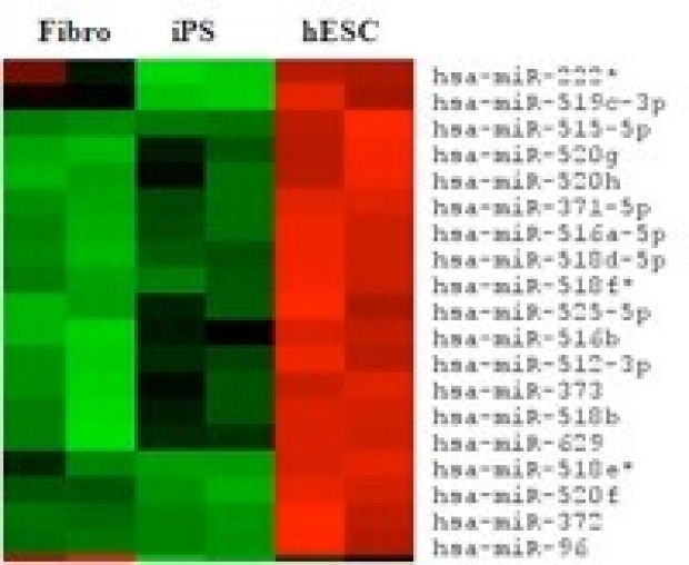 Transcriptional profiling of human ES cells and human IPS cells